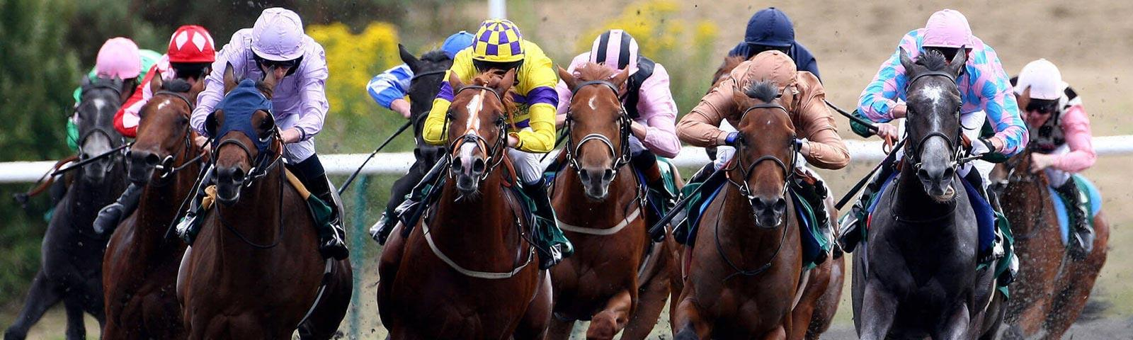 Group of jockeys racing at Lingfield Park Resort.
